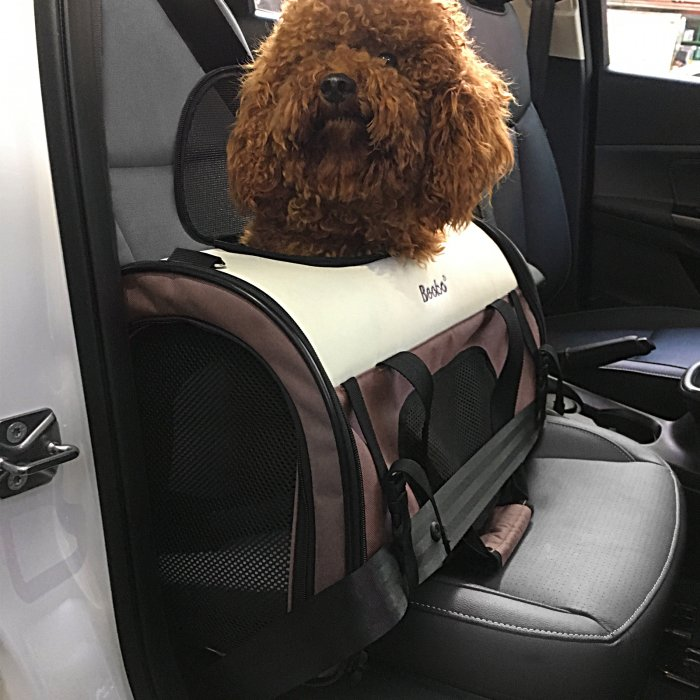 Expandable Pet Carrier with Padding